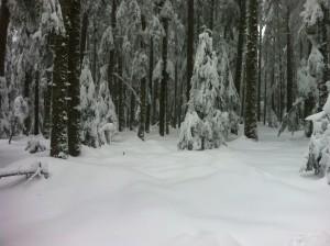 Prémice hivernal dans Chants et Poèmes ggg4-300x224